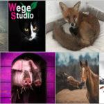 Korabiewickie wtorki w Wege Studio – kupuj i pomagaj zwierzętom!